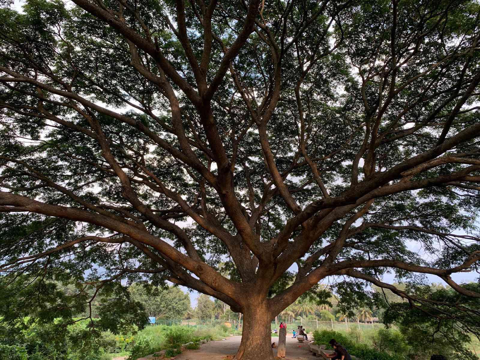 A Tree Gallery: A Visual Novel